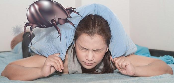 Milben im Bett: Tipps zur Bekämpfung