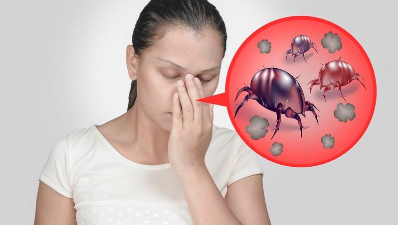 Bei Milben denken die meisten Menschen an Unordnung und schlechte hygienische Zustände. Das in einem Umfeld Milben vorhanden sind, hat aber rein gar nichts mit der Hygiene zu tun. Milben gehören einfach zu dem Umfeld eines menschlichen Hauses. Sie sind (außer für Allergiker) völlig harmlos und übertragen keinerlei Krankheiten. (#01)