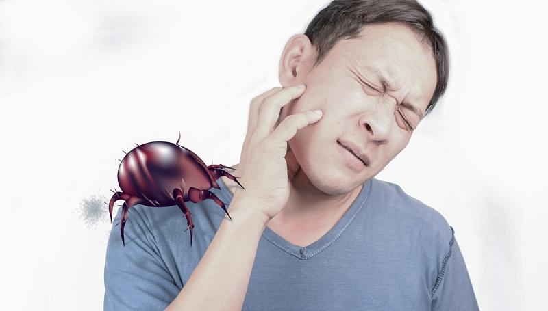 Milben finden sich überall in jedem Haus und in jeder Wohnung. Die kleinen Tierchen gehören zur Gattung der Spinnentiere und sind mit bloßem Auge nicht zu erkennen. (#02)