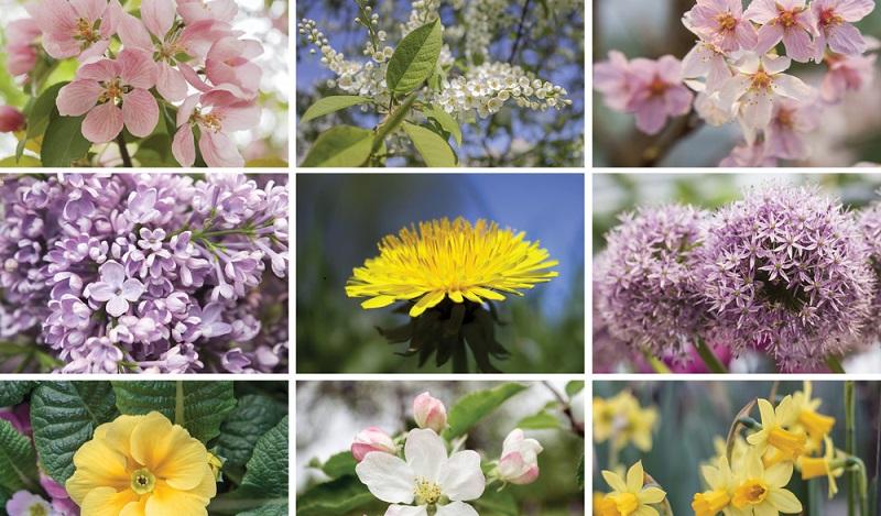 Im Allergiekalender werden in tabellarischer Form oder als grafische Übersicht Informationen zur Verfügung gestellt, welche Pflanzen in welchen Monaten blühen und auch wann jeweils mit der stärksten Pollenbelastung zur rechnen ist. (#02)