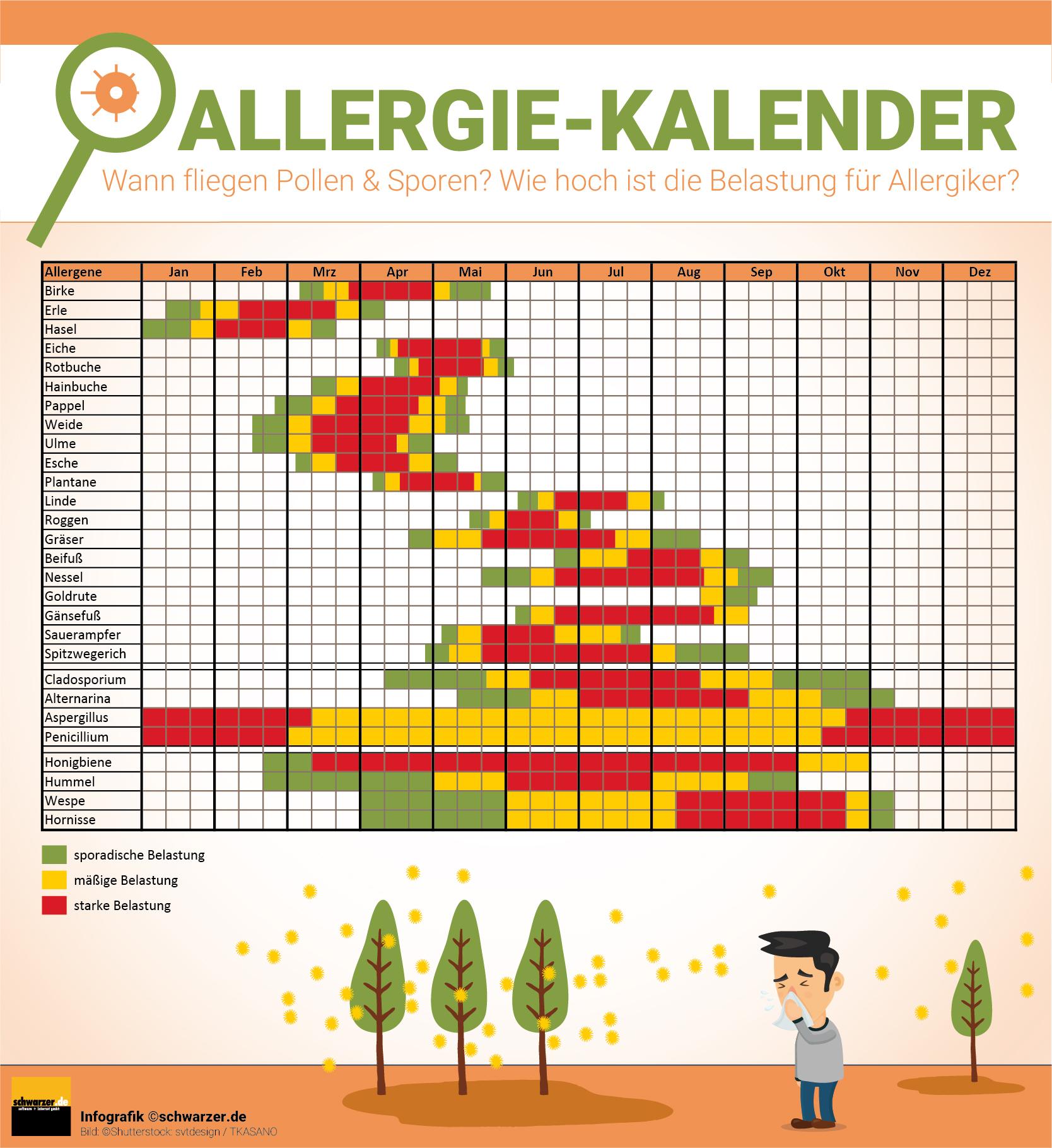 Infografik: Der Allergiekalender zeigt wann Pollen und Sporen fliegen und wie hoch die Belastung für Allergiker in den einzelnen Monaten ist.