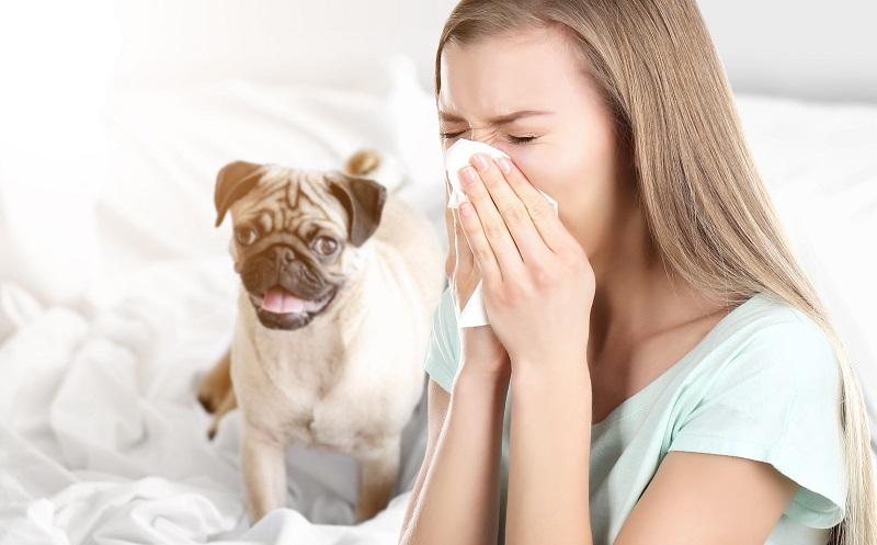 Allergisches Asthma: Wer unter einer Tierhaarallergie leidet, sollte den Kontakt mit diesen Tieren vermeiden. (#05)
