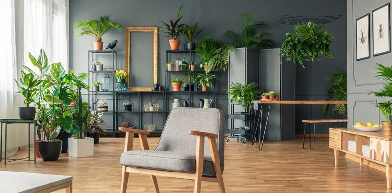 Grün in der Wohnung verbessert die Luft: Wer Pflanzen in seiner Wohnung aufstellt, profitiert von einer Verbesserung der Luft.